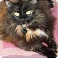 Adopt A Pet :: Chela - Pasadena, CA