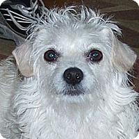 Adopt A Pet :: Tami - La Habra Heights, CA