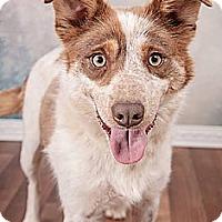 Adopt A Pet :: Franqui - Alliance, NE