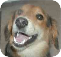Border Collie Mix Dog for adoption in Warren, New Jersey - Bailey