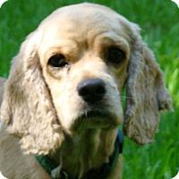 Adopt A Pet :: Holt - Sugarland, TX