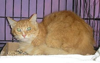 Domestic Shorthair Cat for adoption in Lovingston, Virginia - Quinn (Feral)