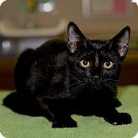 Adopt A Pet :: Julius - Medina, OH