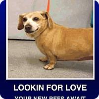 Adopt A Pet :: Betty Davis - Morrisville, PA