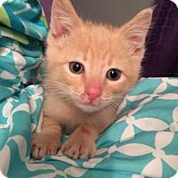 Adopt A Pet :: Mateo - Geneseo, IL