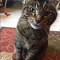 Adopt A Pet :: Buddy - $20 adoption fee - Jamestown, MI