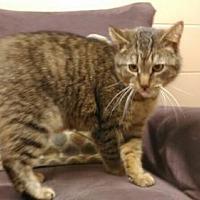 Adopt A Pet :: Big Boy - Abrams, WI