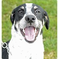 Adopt A Pet :: Tink - Avon, OH