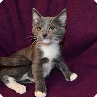 Adopt A Pet :: Serena - Buford, GA