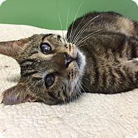 Adopt A Pet :: Lux - Tioga, PA