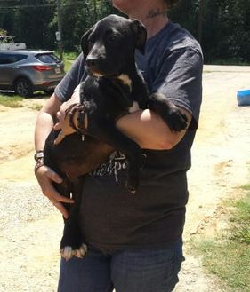 Black Mouth Cur Mix Dog for adoption in Livingston, Texas - Loretta Lynn
