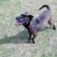 Adopt A Pet :: Dodger - Tunica, MS