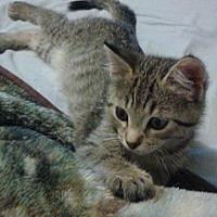 Adopt A Pet :: Aspen - Crocker, MO