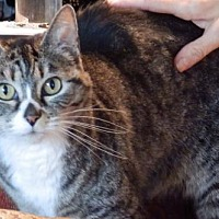 Adopt A Pet :: Offered by Owner ROSETTA - Adult female - HILLSBORO, OR