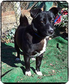 Welsh Corgi Mix Dog for adoption in Marietta, Georgia - TREY (R)