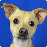 Adopt A Pet :: A1040161 - calimesa, CA