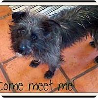 Adopt A Pet :: RASTA - Gilbert, AZ
