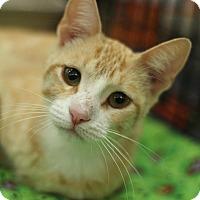 Adopt A Pet :: Sugar - Sacramento, CA