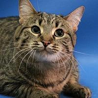Adopt A Pet :: Penelope - Overland Park, KS
