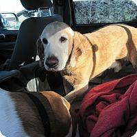 Adopt A Pet :: Charlie - Albuquerque, NM