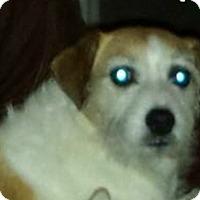 Adopt A Pet :: Tiffi in San Antonio - Austin, TX
