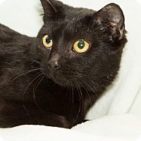 Adopt A Pet :: Rosemarie Addison - Lombard, IL