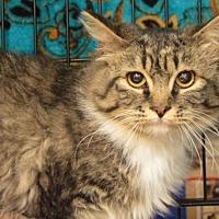 Adopt A Pet :: April - Logan, UT