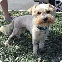 Adopt A Pet :: Marlee - Redondo Beach, CA