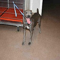 Adopt A Pet :: SKYLER - Aurora, IL