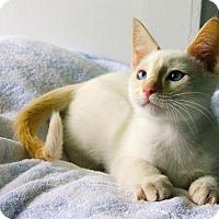 Adopt A Pet :: Olaf - Little Rock, AR