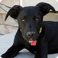 Adopt A Pet :: Renee - Broomfield, CO