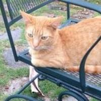 Adopt A Pet :: GABBY - St. Thomas, VI