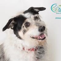 Adopt A Pet :: OREO - Camarillo, CA