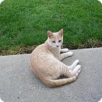 Adopt A Pet :: Willie* - Trexlertown, PA