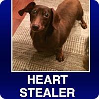 Adopt A Pet :: Wagoner - Morrisville, PA