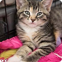 Adopt A Pet :: Lacey - Merrifield, VA