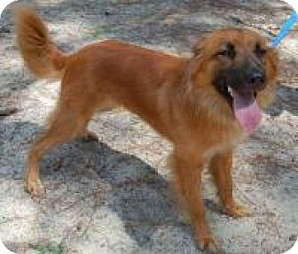 Shepherd (Unknown Type) Mix Dog for adoption in Marlton, New Jersey - Dakota
