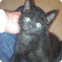 Adopt A Pet :: Wagner - North Highlands, CA