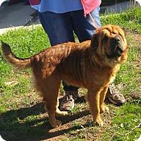 Adopt A Pet :: Amber - Apple Valley, CA