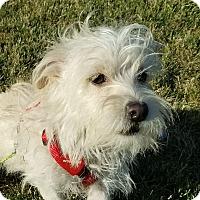 Adopt A Pet :: Malcolm - San Francisco, CA
