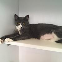 Adopt A Pet :: Pearl - Goshen, NY