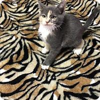 Adopt A Pet :: Josie - Butner, NC
