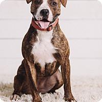 Adopt A Pet :: Vonnie - Portland, OR
