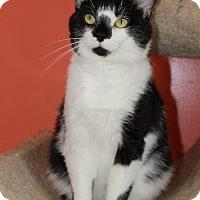 Adopt A Pet :: Higgins - Erwin, TN