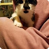 Adopt A Pet :: ZuVanna - Cardwell, MT