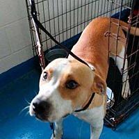 Adopt A Pet :: Raff - Waycross, GA