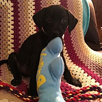 Adopt A Pet :: MASON - Portsmouth, NH