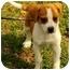 Photo 2 - Beagle Mix Puppy for adoption in Staunton, Virginia - Darby