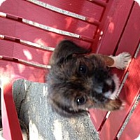 Adopt A Pet :: Poppy - North Hollywood, CA