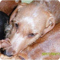 Adopt A Pet :: Gus aka Curly - Vale, OR
